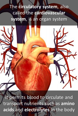 Circulatory system micro-learning cards