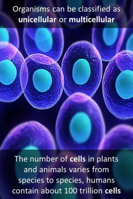 Cells in Animals,Plants and Humans bite sized information