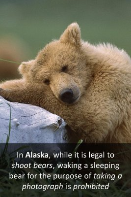 Weird Laws in Alaska bite sized information