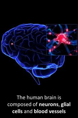 Brain composition bite sized information