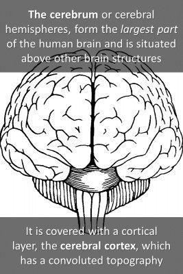 Brain structure micro courses