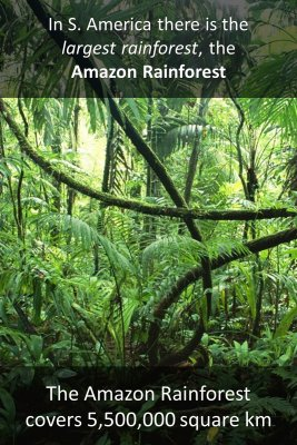 The Amazon - back
