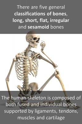 Bones - back