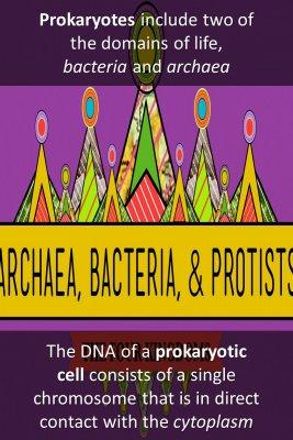 Main Characteristics of Prokaryotic cells - front