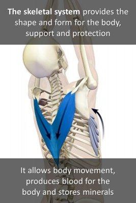 Human skeleton knowledge cards