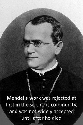 Gregor Mendel - back