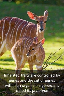 Heredity - back