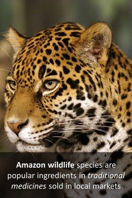 Amazon species - back