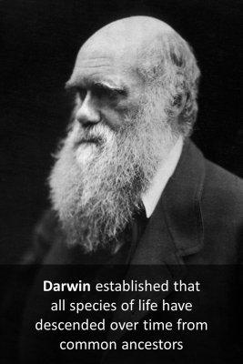 Darwin - back