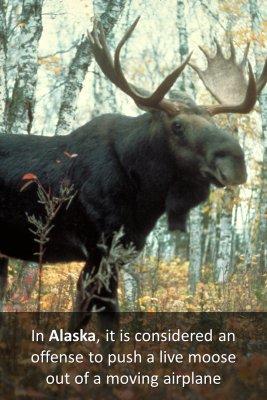 Weird Laws in Alaska - back