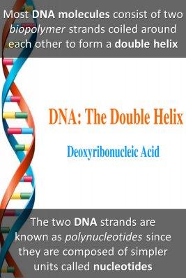 DNA polynucleotides bite sized information