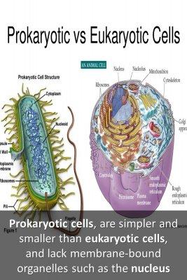 Prokaryotic cells - back