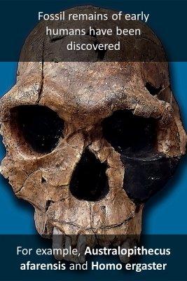 Prehistory bite sized information