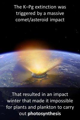 K–Pg extinction - back