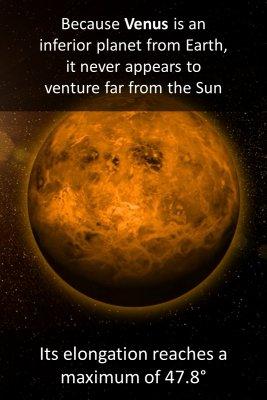 Bright Venus - back