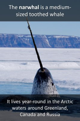 The narwhal micro courses