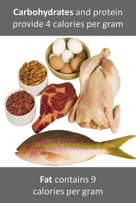 Food and macronutrients - back