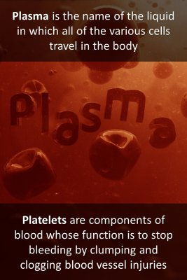 Cells and components - back