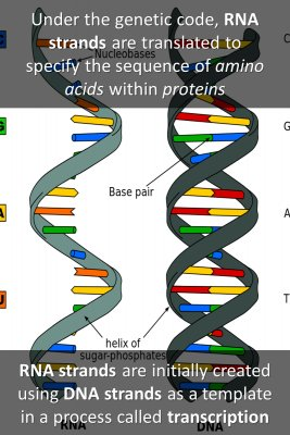 DNA and RNA - back
