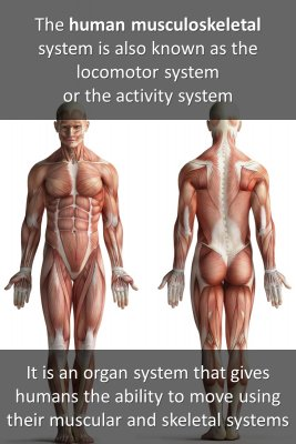 The Musculoskeletal System micro-learning cards