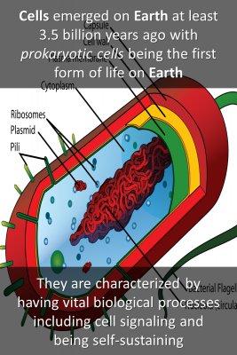 Prokaryotic cells knowledge cards