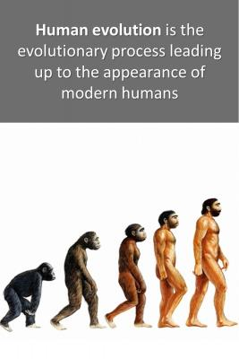 Human evolution micro-learning cards